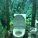 水族館トイレが凄い!「ヒポポパパ」海の見える絶景カフェ